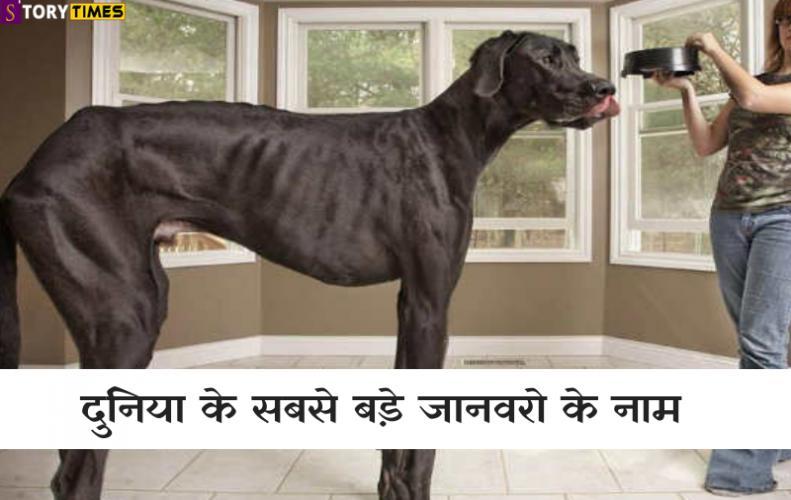 दुनिया के सबसे बड़े जानवरो के नाम | World's Bigest Animal In Hindi