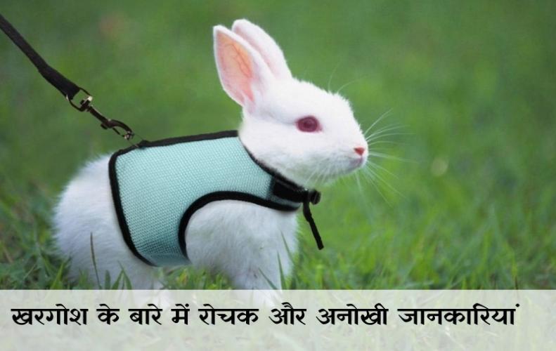 खरगोश के बारे में रोचक और अनोखी जानकारियां | Interesting Facts About Rabbits