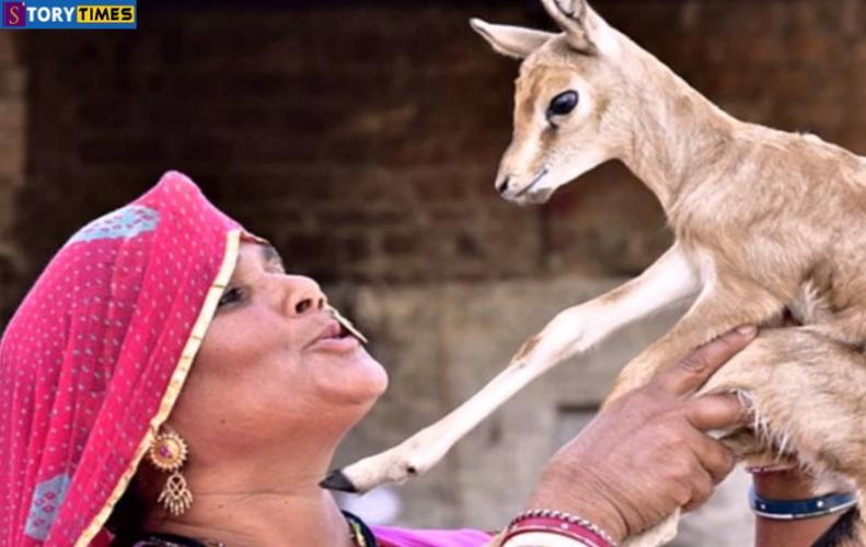 इस समाज की महिलाएं पिलाती है हिरन के बच्चों को दूध । Bishnoi Samaj Information in Hindi