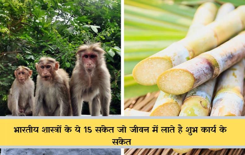 भारतीय शास्त्रों के ये 15 संकेत जो जीवन में लाते है शुभ कार्य के संकेत | Good Luck Sign In Hindi