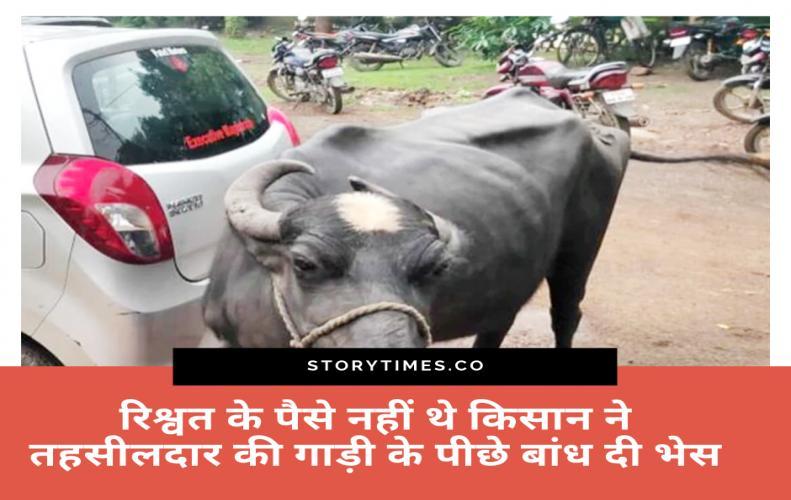 रिश्वत के पैसे नहीं थे किसान ने तहसीलदार की गाड़ी के पीछे बांध दी भैंस |M.P Farmer Bribe Matter Hind