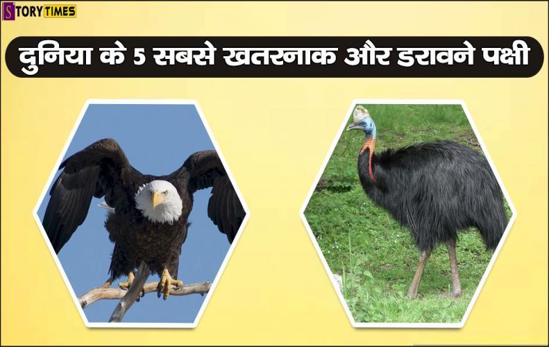दुनिया के 5 सबसे खतरनाक और डरावने पक्षी | Most Dangerous Birds World In Hindi