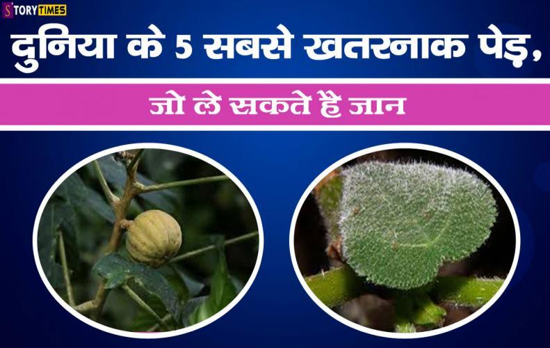 दुनिया के 5 सबसे खतरनाक पेड़, जो ले सकते है जान | Top 5 Dangerous Tree In World In Hindi