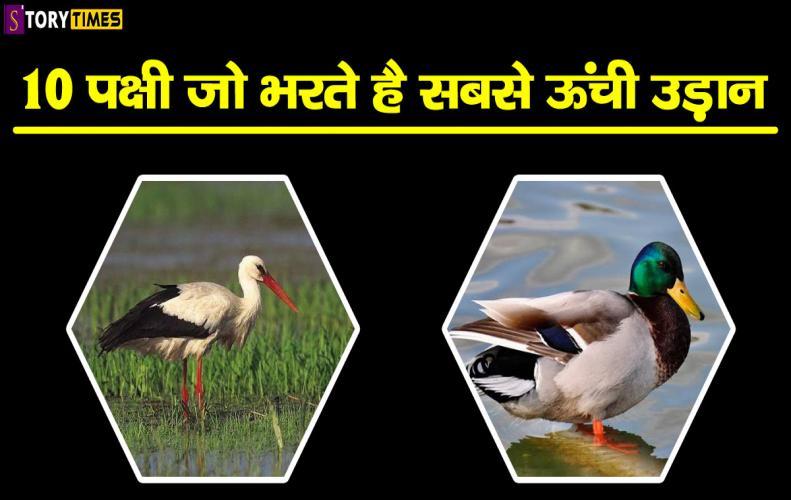 10 पक्षी जो भरते है सबसे �...