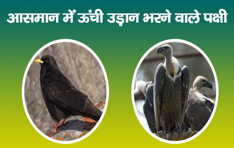 आसमान में ऊंची उड़ान भरने वाले पक्षी   Birds Flying High In The Sky In Hindi